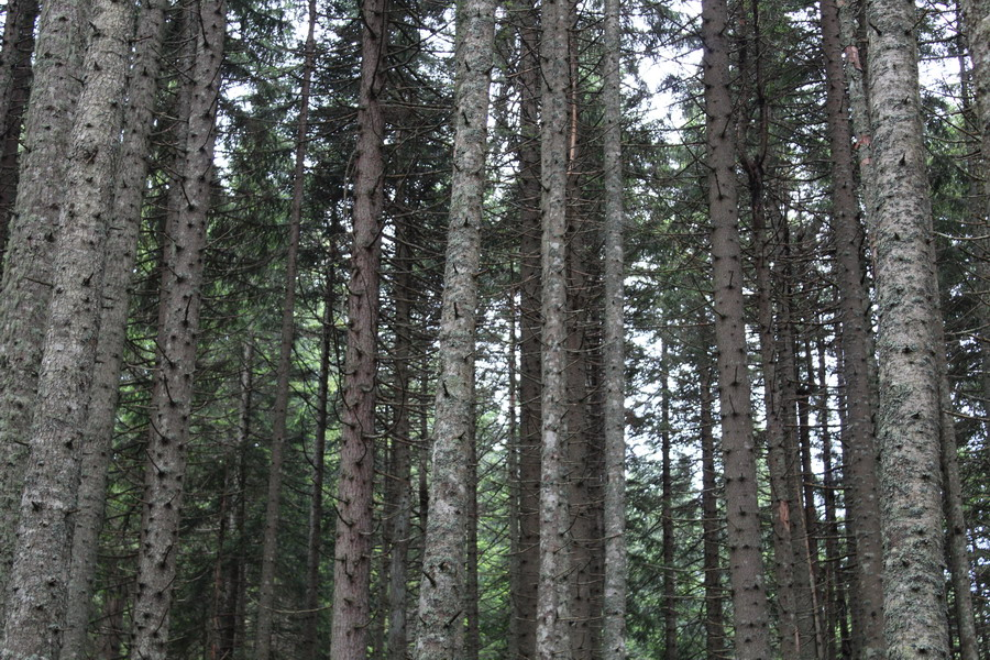 Название: Лес в Черногории.JPG Просмотры: 49  Размер: 296.2 Кб