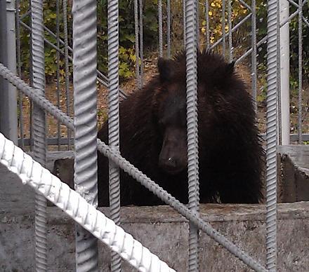 Нажмите на изображение для увеличения Название: Медведь.jpg Просмотры: 559 Размер:98.2 Кб ID:14415