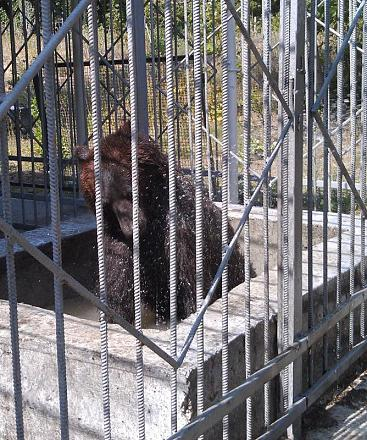 Нажмите на изображение для увеличения Название: Купание медведя.jpg Просмотры: 440 Размер:156.5 Кб ID:14416