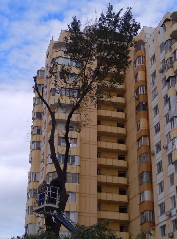 Название: дерево район мид.jpg Просмотры: 625  Размер: 141.0 Кб