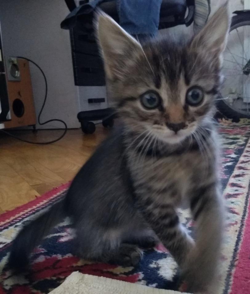 Название: Фото домашнего котенка.jpg Просмотры: 702  Размер: 152.4 Кб