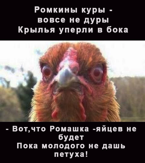 Название: Курица.jpg Просмотры: 22  Размер: 135.3 Кб