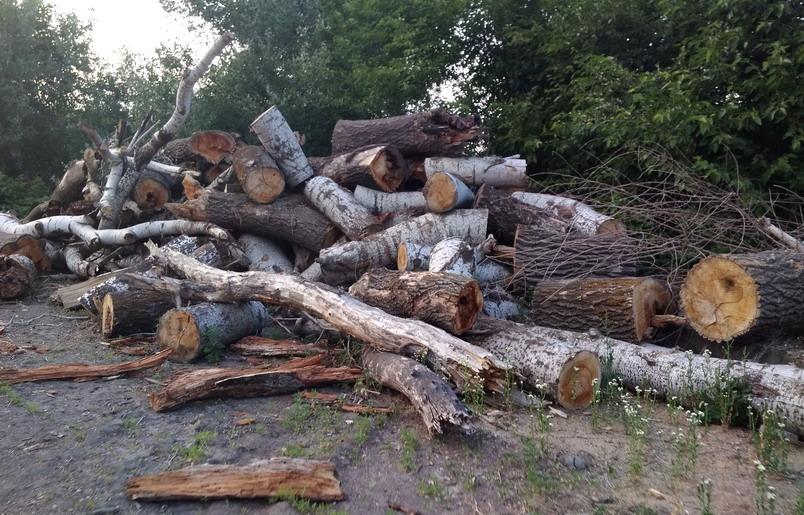 Название: Вырубка леса  - тополя.jpg Просмотры: 206  Размер: 201.8 Кб