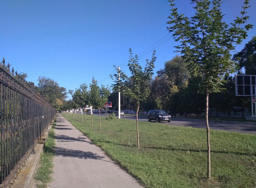 Название: Деревья у НИИ. Приднестровье..jpg Просмотры: 109  Размер: 268.9 Кб