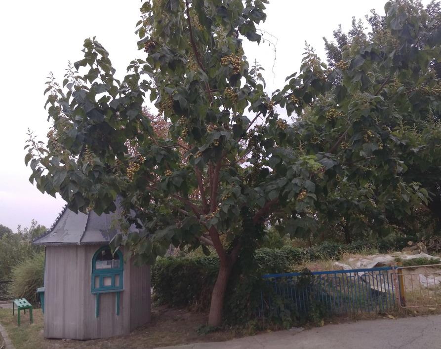 Название: Дерево и домик в Бендерах.jpg Просмотры: 53  Размер: 207.0 Кб