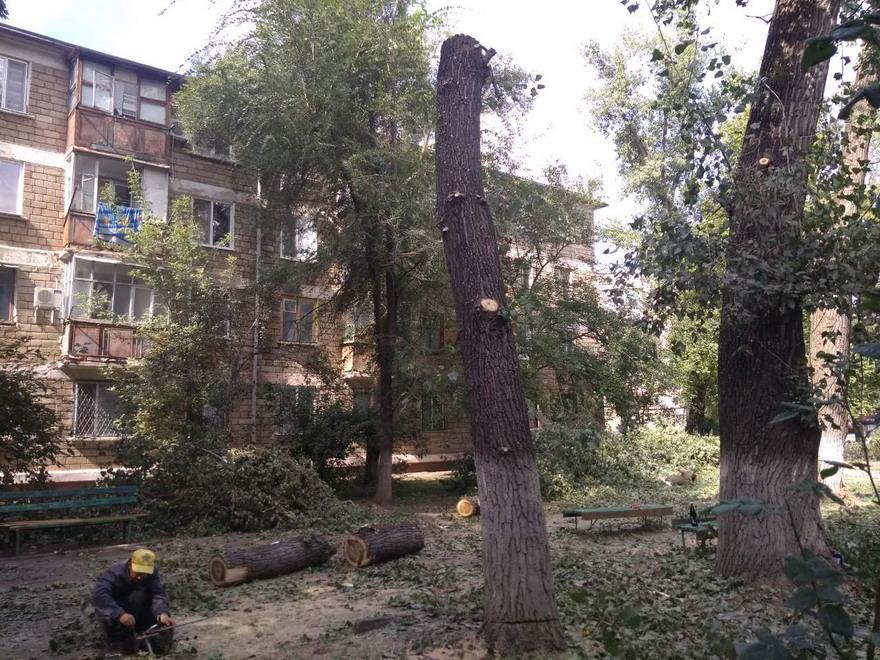 Название: Вырубка деревьев - Фортуна.jpg Просмотры: 52  Размер: 258.5 Кб
