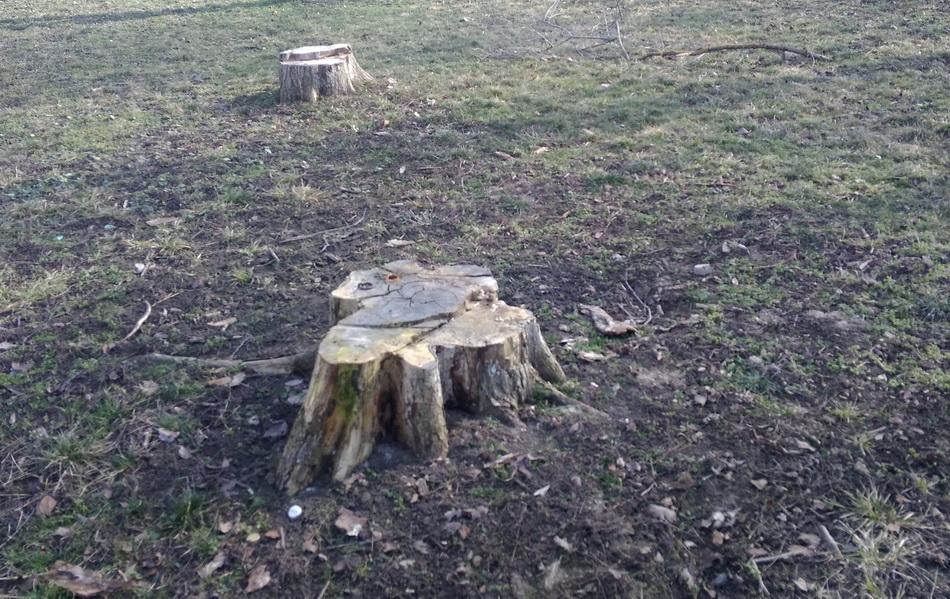 Название: Пни в парке Тирасполя.jpg Просмотры: 183  Размер: 322.9 Кб