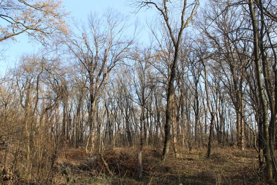 Название: Лес напротив Слободзеи.JPG Просмотры: 511  Размер: 343.1 Кб