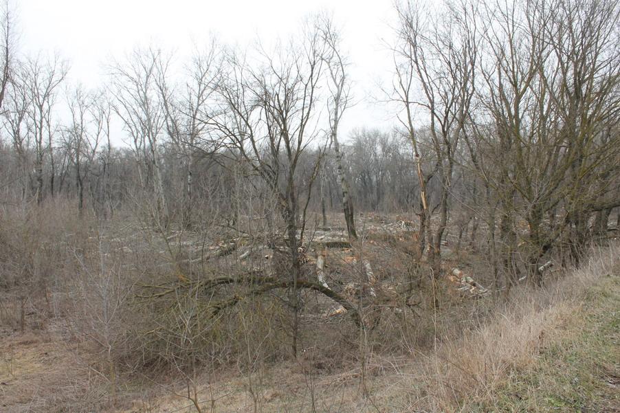 Название: 2 - вырубленный гектар деревьев.JPG Просмотры: 215  Размер: 255.5 Кб