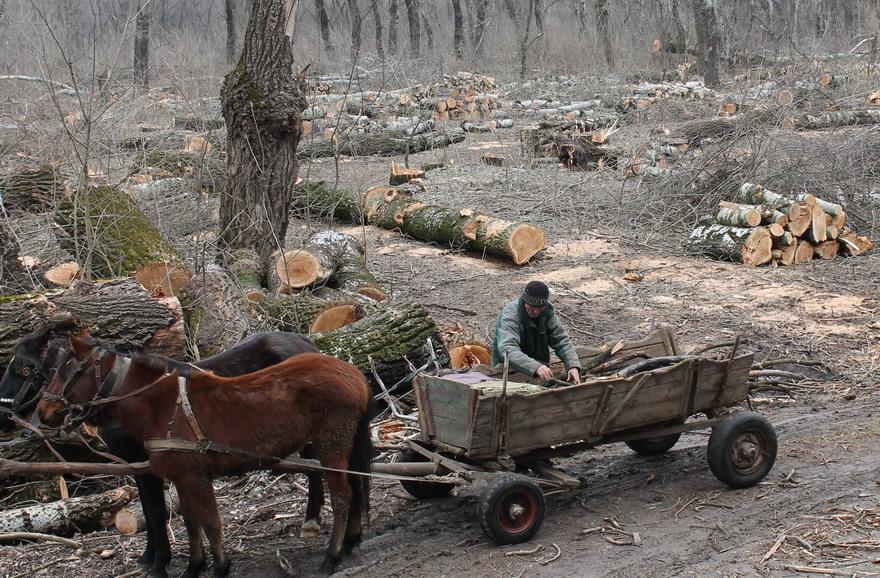 Название: 8 - самовывоз дров с Терновки.JPG Просмотры: 187  Размер: 282.2 Кб