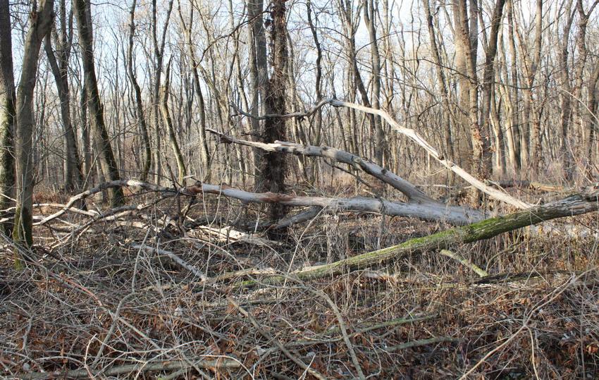 Название: Лес в Слободзее за Днестром.JPG Просмотры: 169  Размер: 304.7 Кб