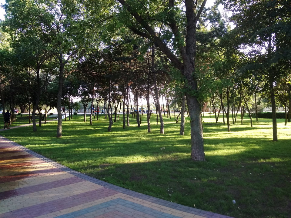 Название: Деревья в Екатерининском парке.jpg Просмотры: 2187  Размер: 331.9 Кб