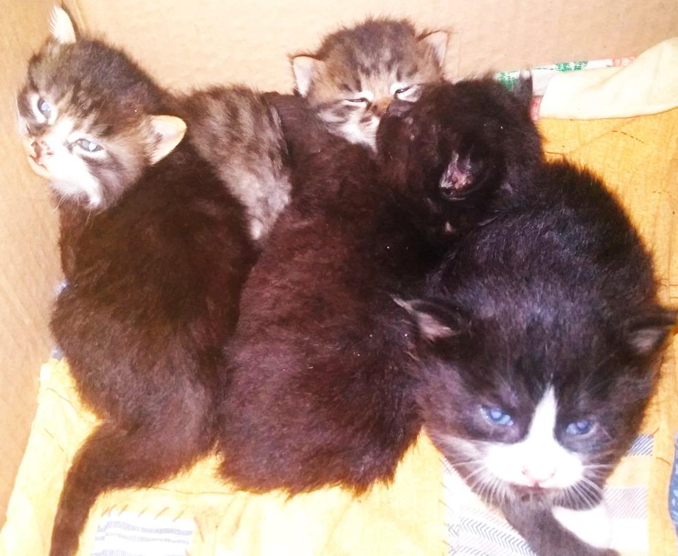 Название: Котята Тирасполь.jpg Просмотры: 35  Размер: 190.7 Кб