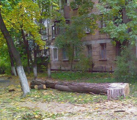 Нажмите на изображение для увеличения Название: Вырубка деревьев в Тирасполе.jpg Просмотры: 473 Размер:127.8 Кб ID:12645