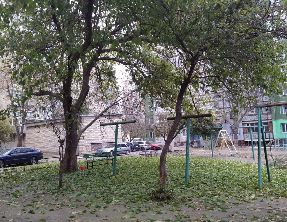 Название: Осень зеленый листопад.jpg Просмотры: 40  Размер: 386.0 Кб