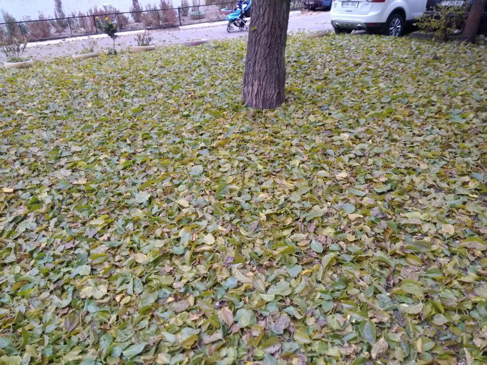 Название: Зеленая листва.jpg Просмотры: 42  Размер: 352.8 Кб