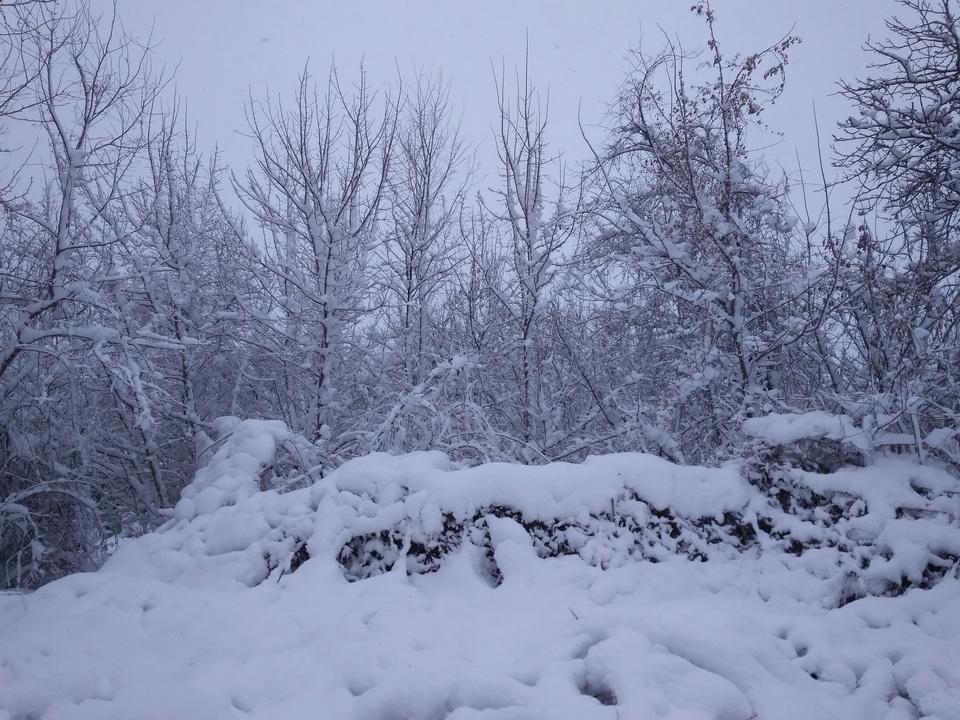 Название: Зима 2021 в Тираспольском лесу.jpg Просмотры: 123  Размер: 304.0 Кб