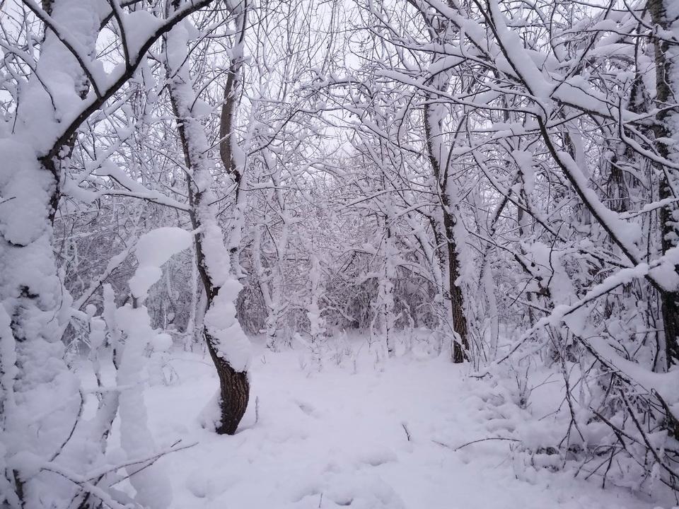 Название: Приднестровская зимняя сказка.jpg Просмотры: 122  Размер: 345.0 Кб
