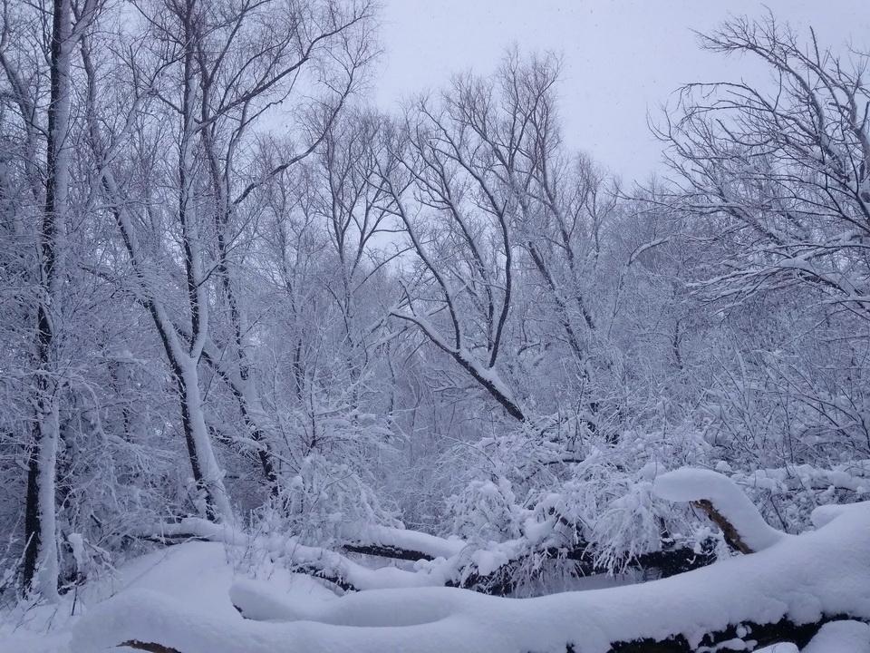 Название: Зима в Приднестровье 2021.jpg Просмотры: 91  Размер: 364.0 Кб