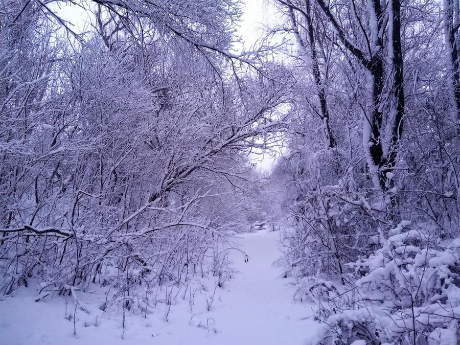 Название: Дорожка в снегу - ПМР.jpg Просмотры: 92  Размер: 379.6 Кб