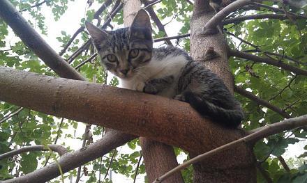 Нажмите на изображение для увеличения Название: Древесная кошка.jpg Просмотры: 299 Размер:81.7 Кб ID:16346