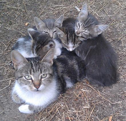 Нажмите на изображение для увеличения Название: Кошка с котятами.jpg Просмотры: 281 Размер:213.6 Кб ID:16872