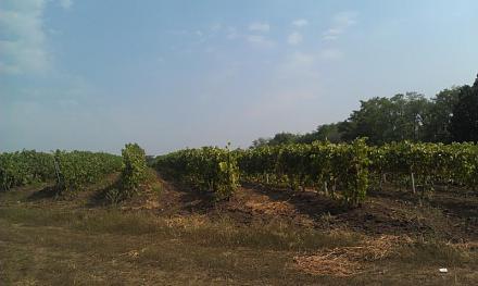Нажмите на изображение для увеличения Название: Виноградники Квинта.jpg Просмотры: 384 Размер:49.7 Кб ID:14403