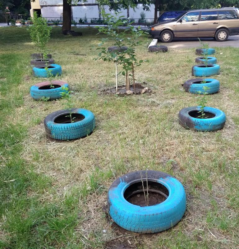Название: Деревья в авто шинах.jpg Просмотры: 166  Размер: 340.9 Кб
