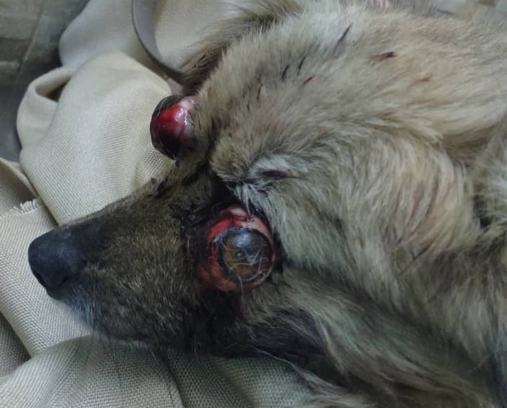 Название: Собачка с выдавленными глазами.jpg Просмотры: 187  Размер: 133.0 Кб