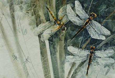 Нажмите на изображение для увеличения Название: Попрыгуньи стрекозы.jpg Просмотры: 220 Размер:74.9 Кб ID:13765