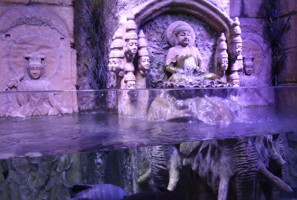 Название: Будда в аквариуме.JPG Просмотры: 119  Размер: 213.3 Кб