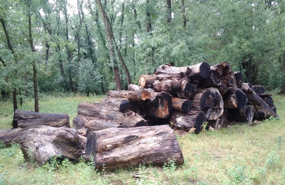 Название: Кицканский лес - Приднестровье.jpg Просмотры: 979  Размер: 327.3 Кб