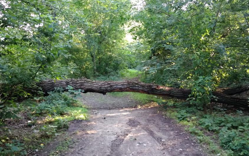 Название: Слева от парома - дерево на дороге.jpg Просмотры: 270  Размер: 223.8 Кб