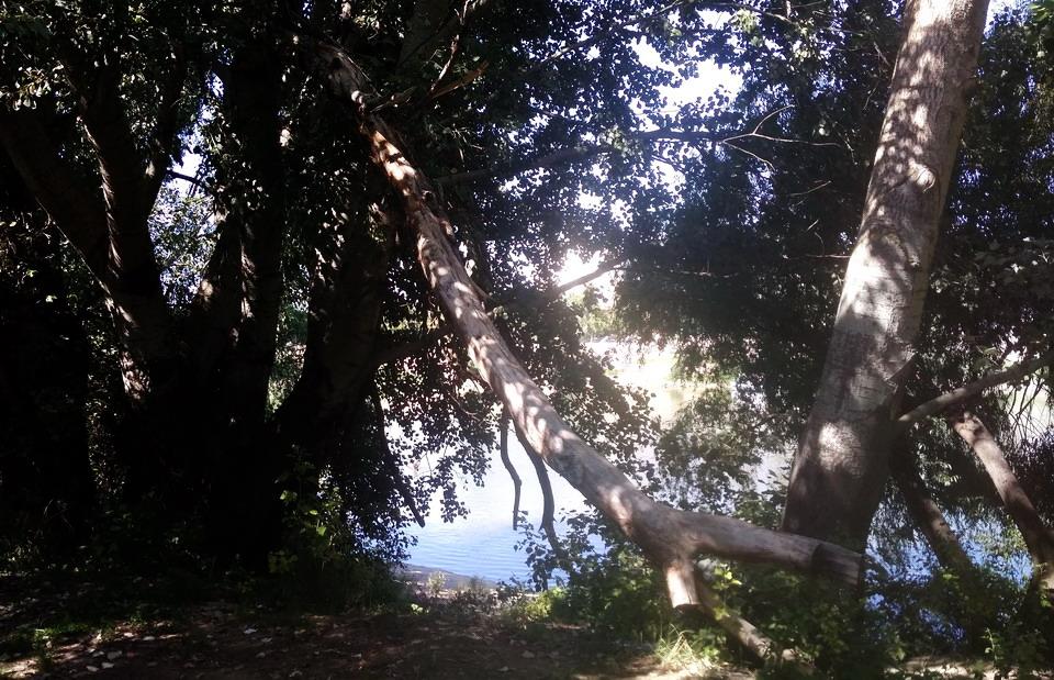 Название: Лес у Парома напротив гостиницы Аист.jpg Просмотры: 1074  Размер: 262.8 Кб