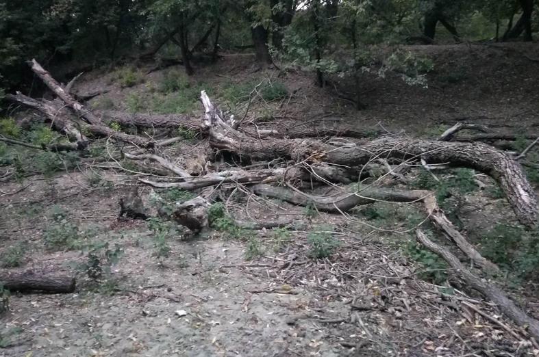 Название: Лесополоса Тирасполь Южный - ветки деревьев.jpg Просмотры: 24  Размер: 170.8 Кб