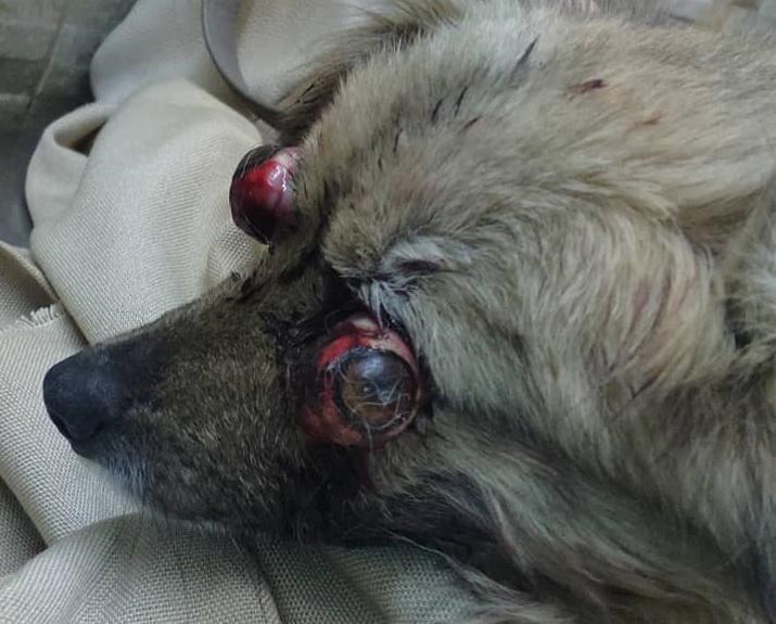 Название: Собачка с выдавленными глазами.jpg Просмотры: 263  Размер: 133.0 Кб