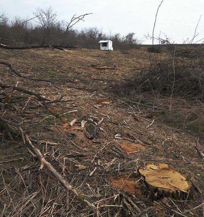 Название: Вырубка деревьев на Гиске.jpg Просмотры: 349  Размер: 228.6 Кб