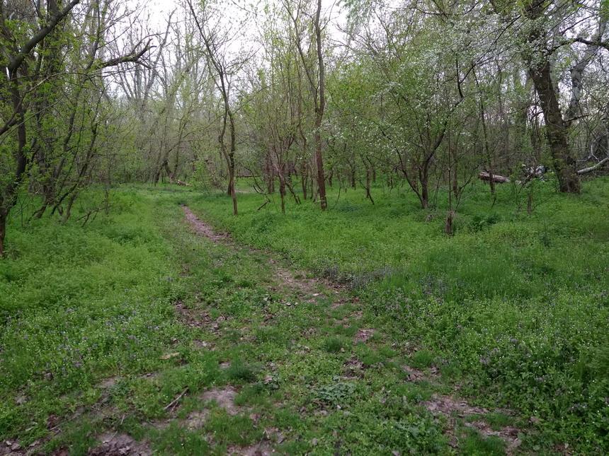 Название: Весна 2018 в ПМР - лес.jpg Просмотры: 521  Размер: 298.7 Кб