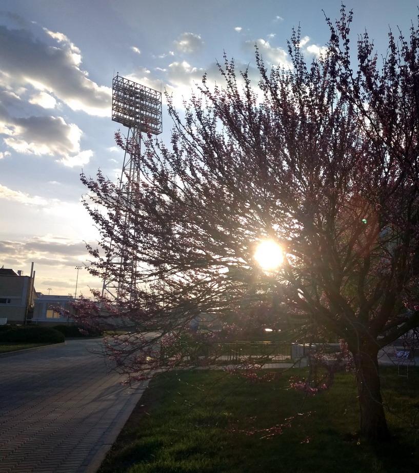 Название: Весна в ПМР на стадионе.jpg Просмотры: 297  Размер: 283.7 Кб