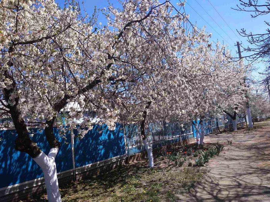Название: Весна в Слободзее 2020.jpg Просмотры: 124  Размер: 327.1 Кб