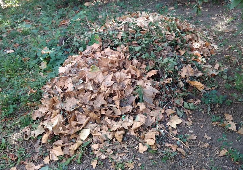 Название: надо ли убирать опавшую листву.jpg Просмотры: 1246  Размер: 276.2 Кб