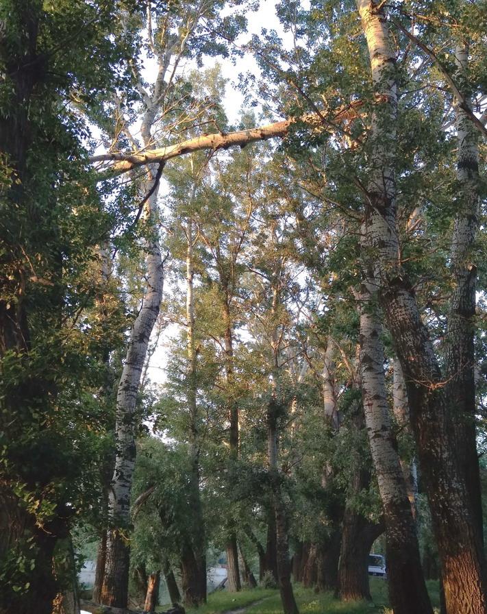 Название: Ветка между деревьев.jpg Просмотры: 76  Размер: 331.7 Кб