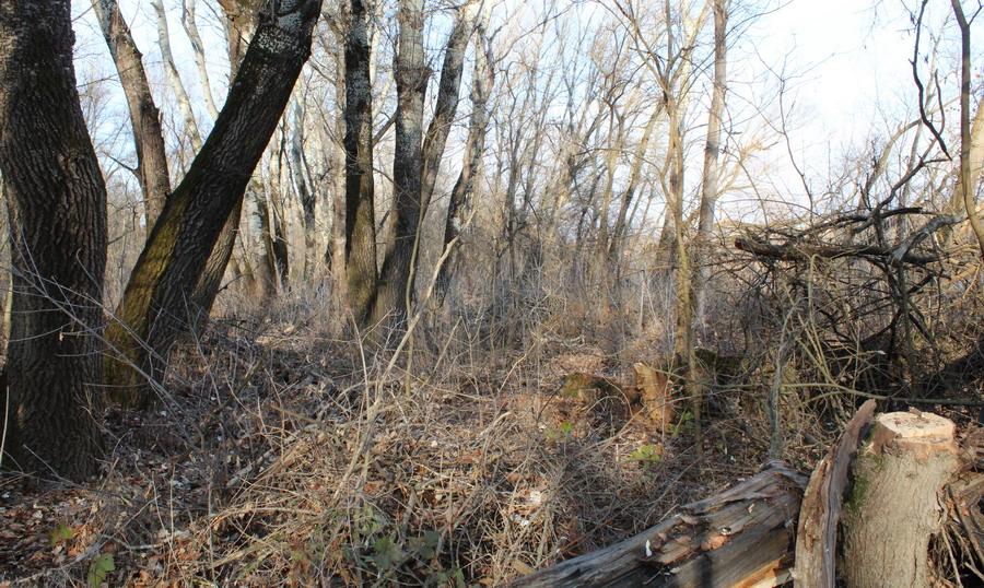 Название: Слободзея - лес.JPG Просмотры: 173  Размер: 280.1 Кб