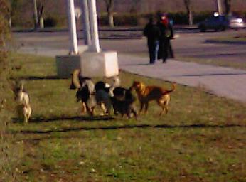 Название: бездомные собаки.jpg Просмотры: 510  Размер: 39.4 Кб