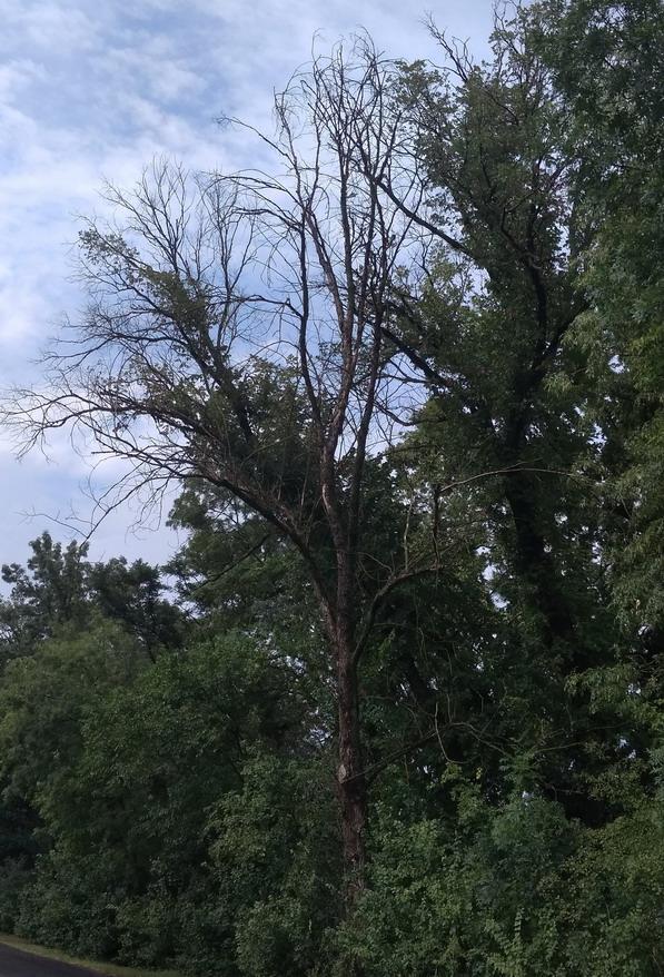 Название: Сухое дерево.jpg Просмотры: 4986  Размер: 242.2 Кб