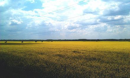 Нажмите на изображение для увеличения Название: Желтые поля у Суклеи.jpg Просмотры: 269 Размер:86.1 Кб ID:21711