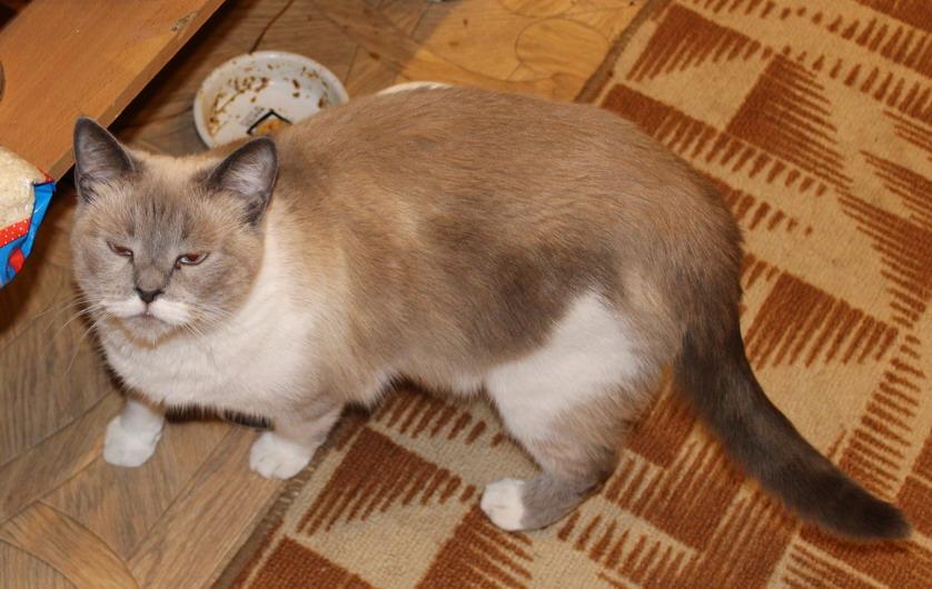 Название: Суровый кот.JPG Просмотры: 442  Размер: 144.6 Кб