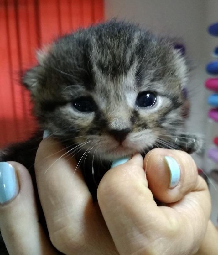 Название: Котенок на руках.jpg Просмотры: 410  Размер: 117.7 Кб