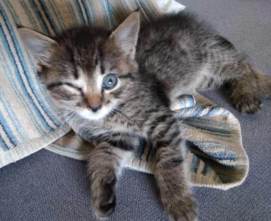 Название: Котенка запип глаз.jpg Просмотры: 764  Размер: 215.7 Кб