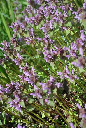 Нажмите на изображение для увеличения Название: цветы в апреле.jpg Просмотры: 381 Размер:96.5 Кб ID:11650
